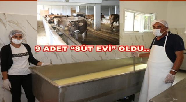 Büyük Şehir süt hakkını Mesudiye Belediyesine devretti..