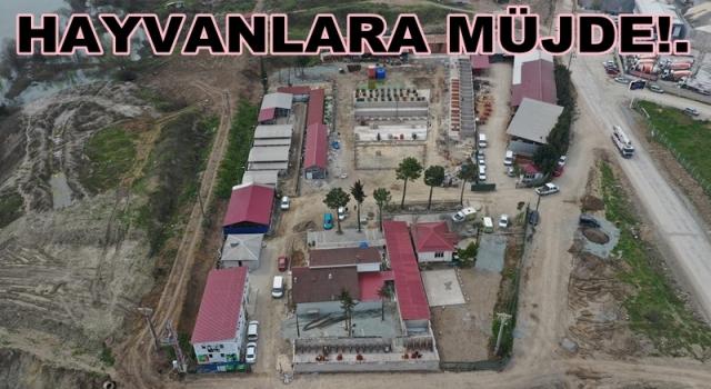 800 Yataklı Hayvan Hastanesi yakında hizmete giriyor..