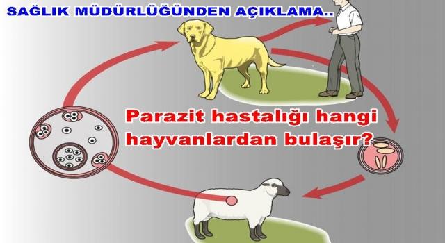Hayvanlardan bulaşan Kist Hastalığı (Kistik Ekinokokkoz)