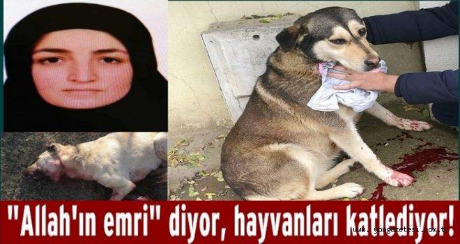 Akli dengesi olmayan kadın hayvanları acımasızca öldürüyor..
