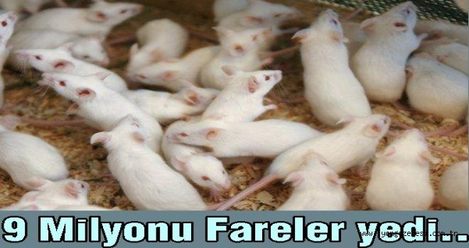 ATM'ye giren fareler yaklaşık 9 milyon TL'yi yedi..
