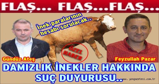 Damızlık sığırlar hakkında suç duyurusu yapıldı..