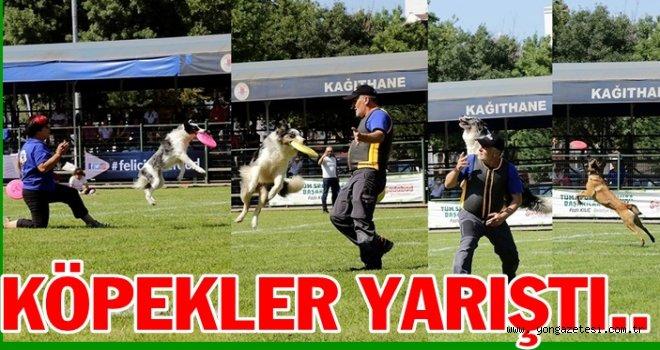 Köpek sporları önem kazanmaya başladı..