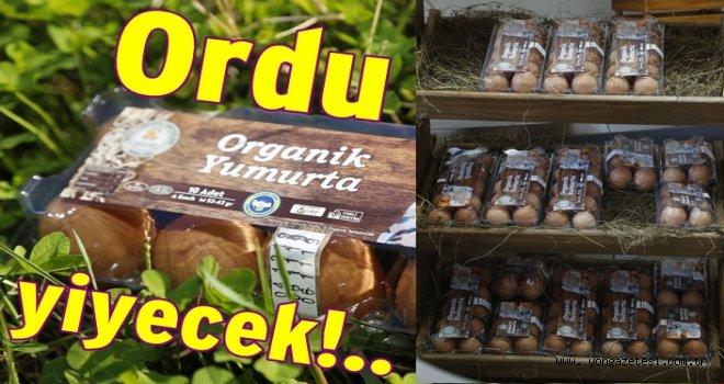 Organik yumurtalar satışa başladı..