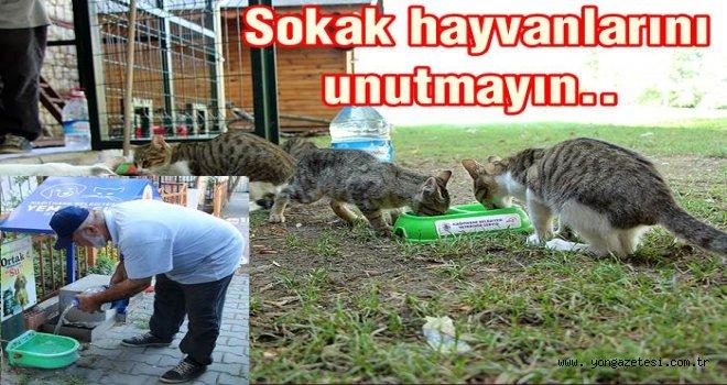 SOKAKTAKİ CANLILARI  SUSUZ BIRAKMIYORLAR..