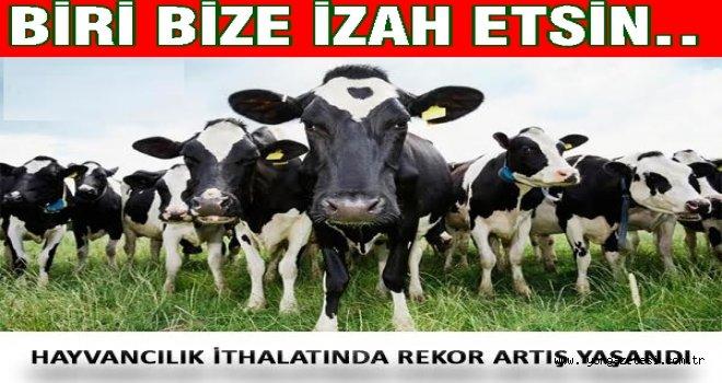 Tarım ülkesinde hayvan ithali yapıyoruz..