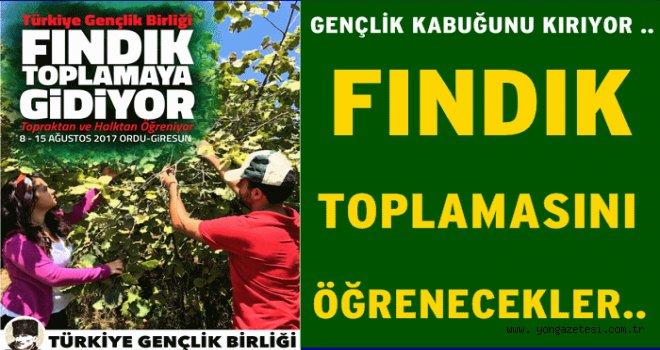 TGB'Lİ GENÇLER FINDIK TOPLAMAYA GELİYOR..
