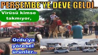 Virüs ortamında Perşembe'ye At ve Deve, Ordu'ya Sucuk pazarı açıldı..