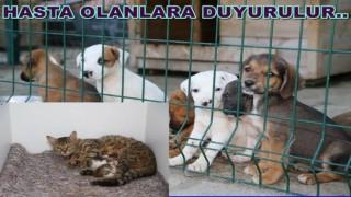 Hayvanlar için özel donanımlı hastane yapılıyor..