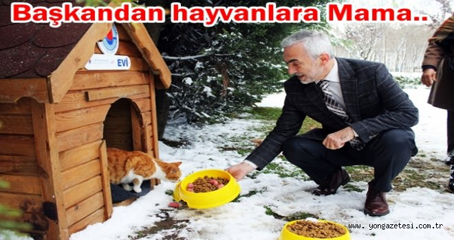 BELEDİYE SOKAK HAYVANLARINI UNUTMADI..