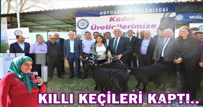 """Çiftçi kadınlara """"KIL KEÇİSİ"""" desteği.."""