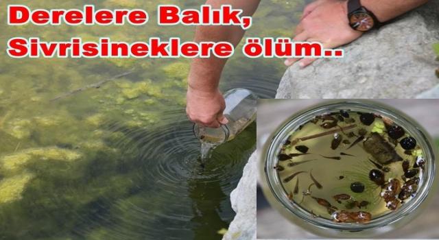 Yeni çözüm. Sivrisinekleri Balıklar yok edecek..